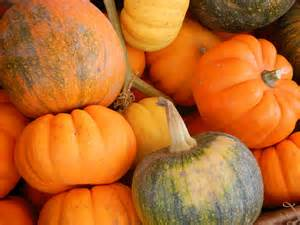 an assortment of pumpkins