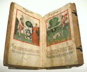 Ibn Butlan, Tacuinum sanitatis