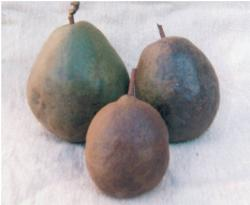 Worcester Black Pear
