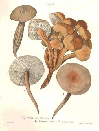 Jean-Jacques Paulet, Treatise on mushrooms